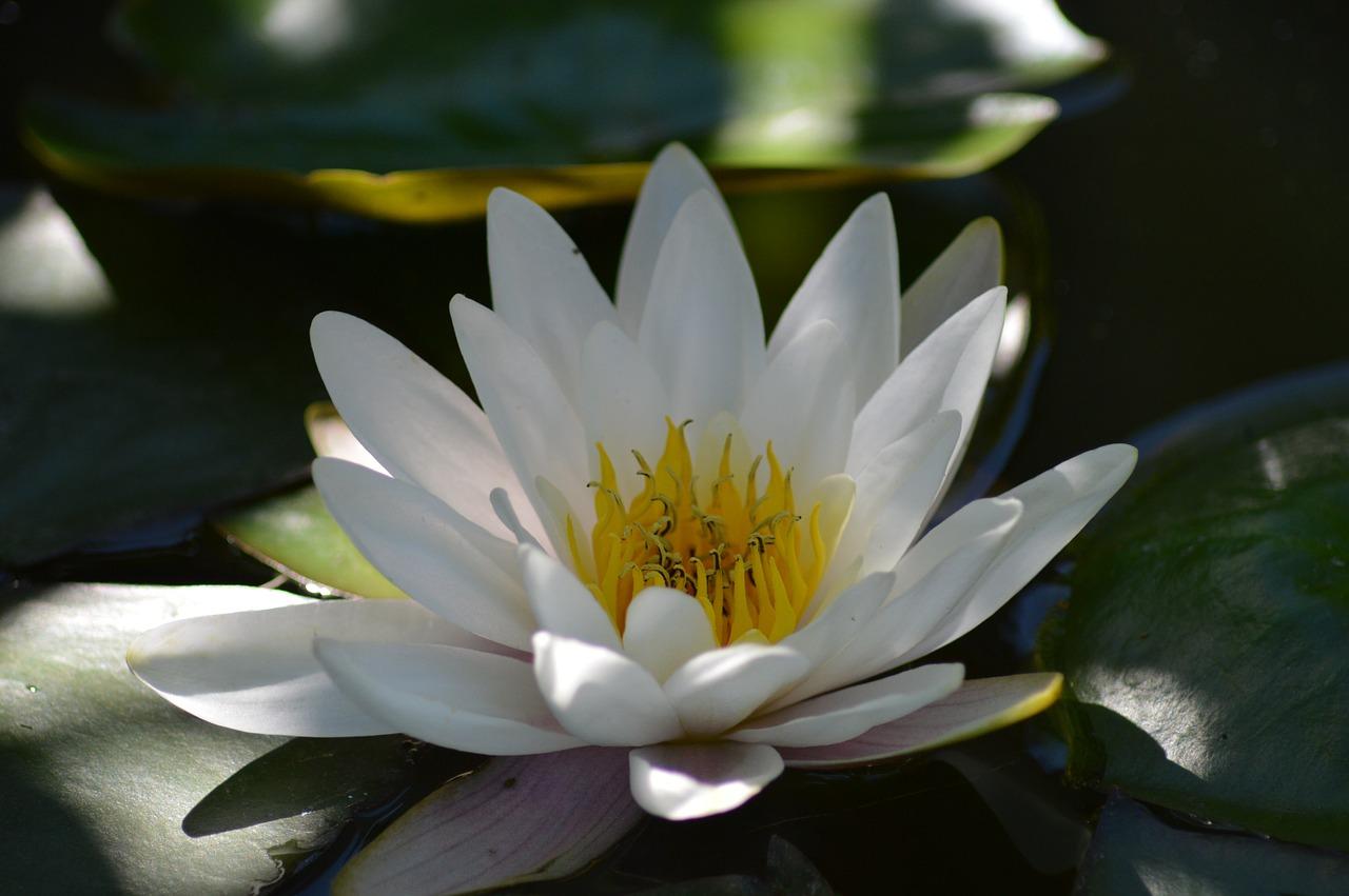 Wpływ nauczyciela na drodze medytacji